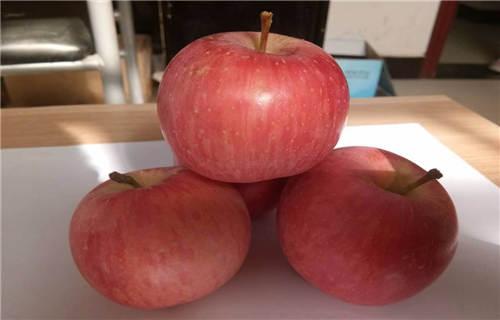 广元苹果 好货供应中心